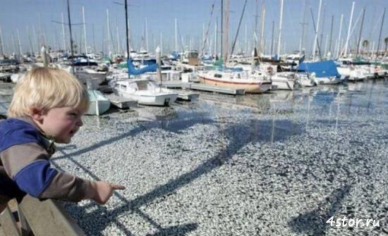 Миллион мёртвых рыбок