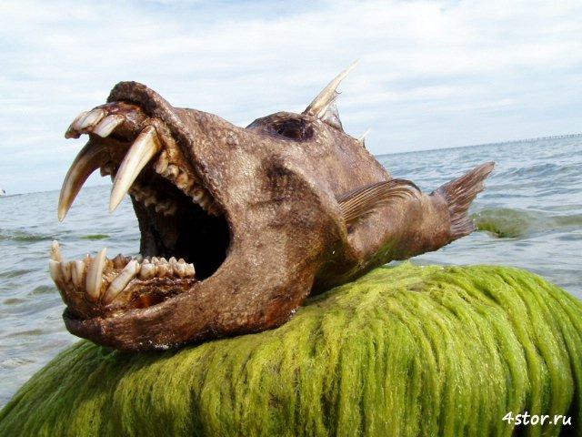 Раскрыта тайна трупа русалки, проданного за $1550 Бегемото-рыба - еще