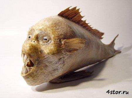Juan Cabana - скульптор или...