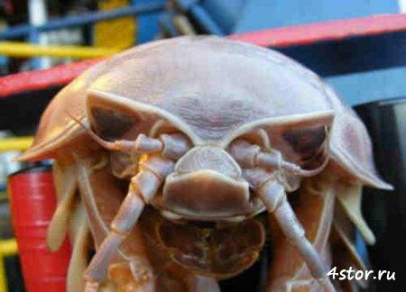 Неизвестные животные, которые населяют нашу планету