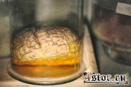 Заброшенная лаборатория по изучению мозга