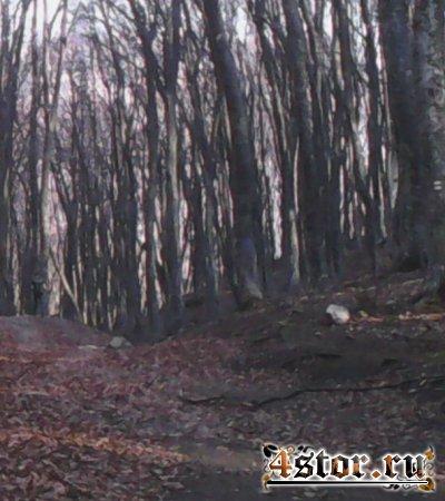 Фигура в лесу