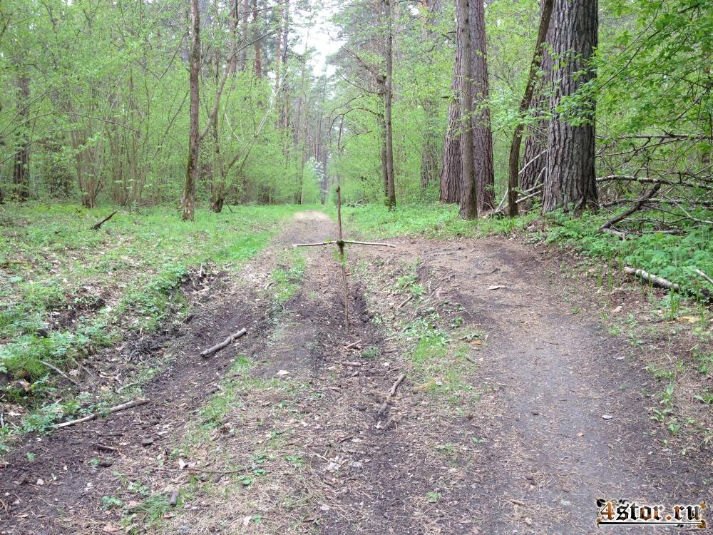 Пожалуйста, будьте аккуратны в лесу!