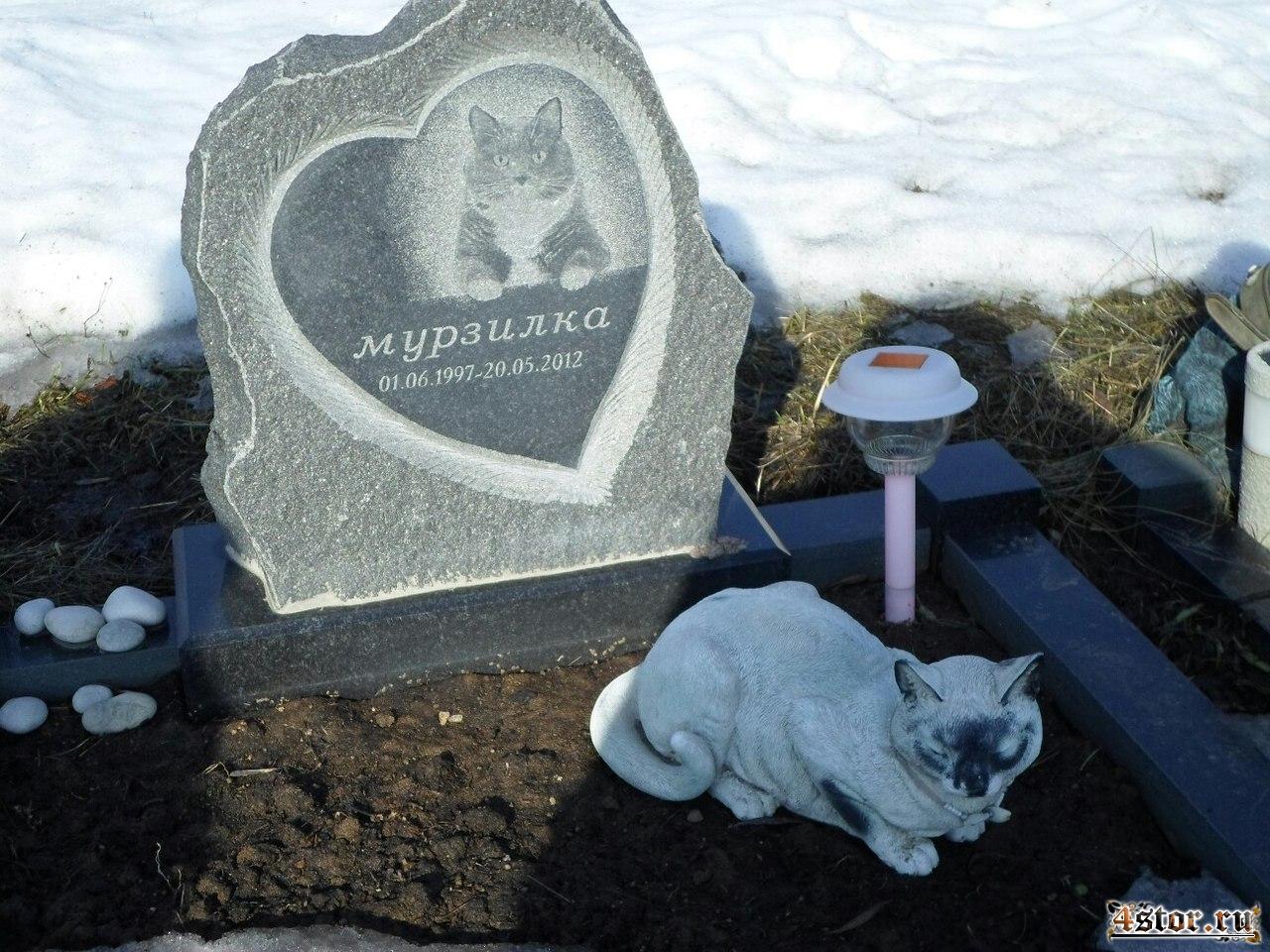 приказа где в москве похоронить кошку Заали (грузинское имя