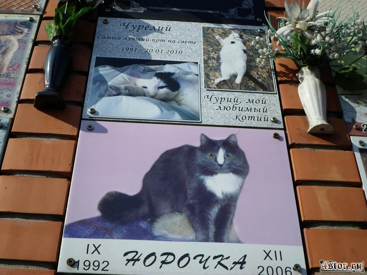 Где в москве похоронить кошку