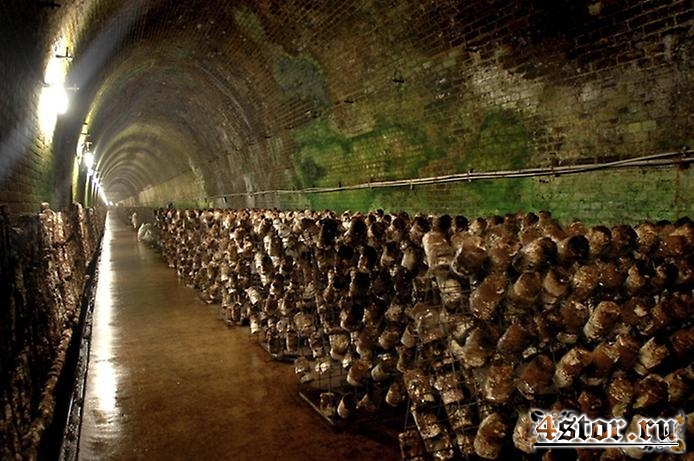Туннель Пиктон Машрум