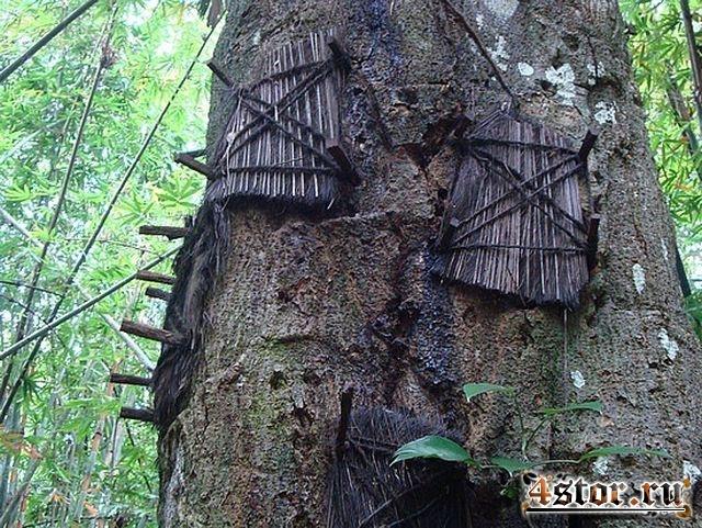 Деревья мертвых младенцев