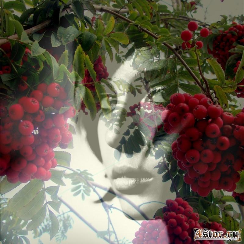 Рябиновые гроздья
